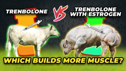Trenbolone-Vs.-Trenbolone-With-Estrogen-Guess-Which-Builds-More-Muscle-YT-Thumbnail.jpg